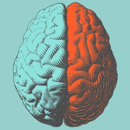 Исследовать мозг без левшей! Почему?